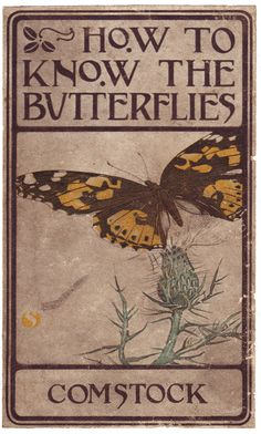 How to Know the Butterflies; a manual of the butterflies of the eastern United States by Comstock, John Henry, 1849-1931; Comstock, Anna Botsford, 1854-1930, joint author