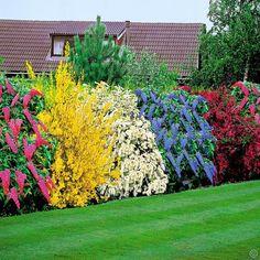 Выбор кустарников для роскошных живых изгородей (статья)