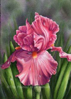 Iris Illumination 9x12 acrylic painting by Arkansas artist, Sheri Hart, The Painter of Dreams