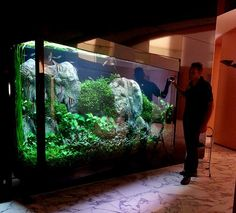 Wow that's a huge but gorgeous tank!