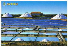 Extracting salt - Aveiro - Portugal