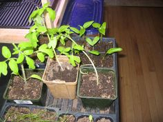 Great blog on gardening in Alaska