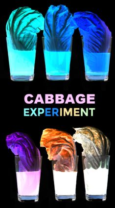 Can you make cabbage glow? Find out with this super cool science experiment for kids! Can you make cabbage glow? Find out with this super cool science experiment for kids! Educational Activities For Kids, Preschool Science, Science For Kids, Science Activities, Classroom Activities, Science Ideas, Cool Science Experiments, Science Fair Projects, Class Projects