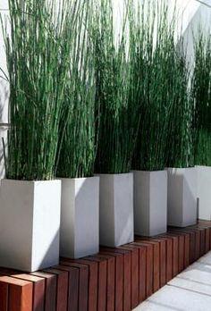 Decoración - Jardín - Minimalista
