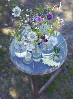 Veldboeket met Zeeuws knoopje - Vul glazen vaasjes en flessen met Zeeuws knoopje (Astrantia), fijn siergras en andere 'wilde' bloemen, zoals fluitenkruid, vergeet-mij-nietjes en schijnanemoon. Bij elkaar uitgestald op een tafeltje of dienblad vormen ze een prachtig, zomers veldboeket.