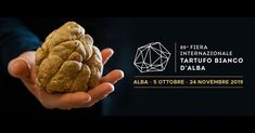 The International Alba White Truffle Fair is back from October to November, as well as the meeting in-between culture, territory and gastronomy. White Truffle, Brochure Design, Truffles, Alba, Tuscany, Travelling, October, Gastronomia, Culture