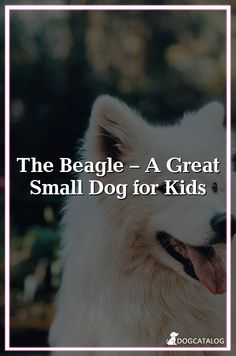 Pitbull Puppy Love: Quotes About Pitbulls Retractable Dog Gate, Small Dogs For Kids, Puppy Love Quotes, 15 Dogs, Living With Dogs, Celebrity Dogs, Baby Pugs, Pet Care Tips, New Puppy