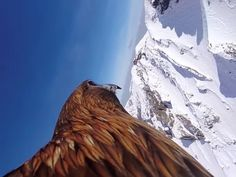Via Please PM for credit. Gopro Drone, Unedited Photos, Wildlife Paintings, Birds Eye View, Save The Planet, Wildlife Photography, Beautiful World, Photo And Video, Image