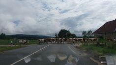 Ranskan maaseutua lehmineen. Country Roads