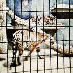 Берлинский зоопарк #berlinzoo #green4city