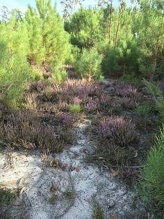 Bild från skogen på hösten