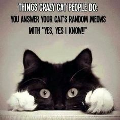 Yep, I'm a crazy cat person! <3