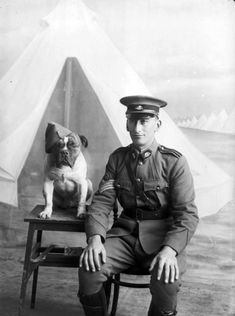 Staff Sergeant Major Morgan and a dog wearing a cap, 1915 sergeant major, bulldog, dogs, vintage photographs, pet, major morgan, staff sergeant, war, friend