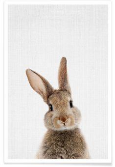 Woodland Bunny Rabbit by Lila & Lola Art Print Rabbit Art, Bunny Rabbit, Lapin Art, Baby Animals, Cute Animals, Rabbit Colors, Wall Art Prints, Canvas Prints, Canvas Canvas