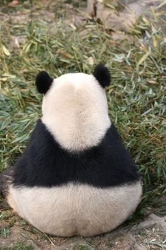 chubby panda photographed from behind