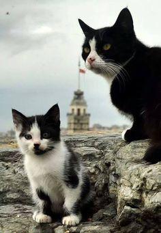 ✿ ❤ Kedicikler, Kızkulesi ve İstanbul, By Yaşar Koç