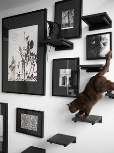 ¡Encuentra ideas variadas y prácticas para escalar paredes de gatos aquí! - ¡Encuentra ideas variadas y prácticas para escalar paredes de gatos aquí! Cat Climbing Wall, Cat Climbing Shelves, Cat Stairs, Gatos Cats, Cat Room, Pet Furniture, Furniture Market, Furniture Stores, Furniture Ideas