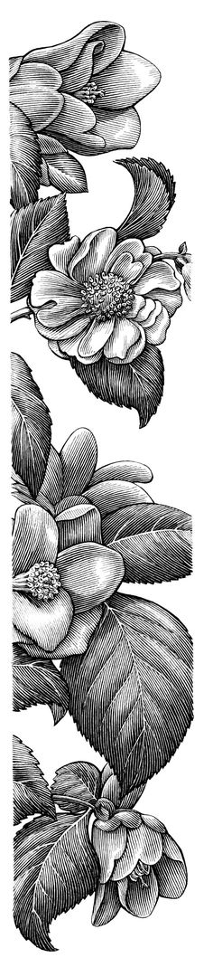 detailed black & white floral drawing...