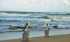 Take a cruise to Cayo Costa and explore the island.