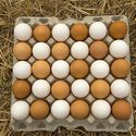 Raising Chickens 101: Collecting, Cleaning, and Storing Chicken Eggs