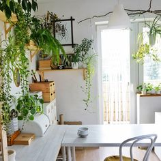 Morning in my studio...with coffee, sun and plants #goodmorning #coffeeandplants #coffee #workspacegoals #warszawjungle #jungalover #plantlover #greenhome #interiodesign #naturelover #studio #whitehome #onmyworkdesk #inmystudio