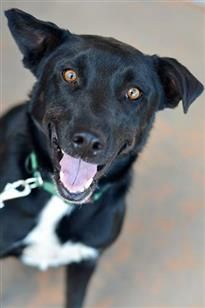 Tuesday's Tails – Find a New Best Friend: Featuring Adoptable Dog Brinkley