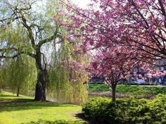 7 Best Parks of Amsterdam - it's spring! time to visit some of Amsterdam's beautiful city parks. Here are our favorites including Westerpark, Vondelpark, Frankendaelpark, Noorderpark and MORE! - Awesome Amsterdam