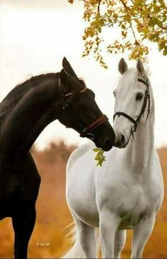Horse sharing his leaf, lol.