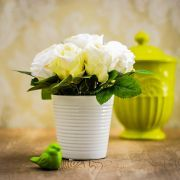 Arranjo de Rosas Brancas | Formosinha Decorações