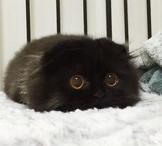 chatons-mignons-02                                                       …