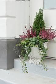 Kuvahaun tulos haulle kukkaistutus ruukku