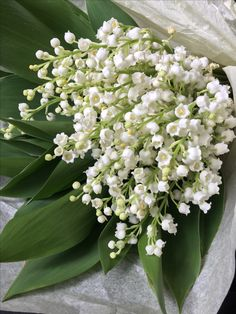 May Flowers, Beautiful Flowers, Bouquets, Lily Of The Valley Flowers, Corporate Flowers, Language Of Flowers, White Gardens, Flower Photos, House Plants