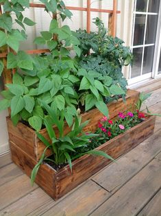 Perfect little garden for apartments or townhouses and it can be created from a used pallet.