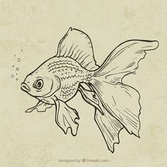 Discover thousands of copyright-free vectors. Graphic resources for personal and commercial use. Thousands of new files uploaded daily. Fish Drawings, Pencil Art Drawings, Art Drawings Sketches, Tattoo Sketches, Disney Drawings, Animal Sketches, Animal Drawings, Art And Illustration, Arte Inspo