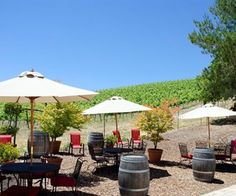 Paso Robles, California, Caliza Winery. Outside seating and a view of the vines