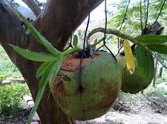 Resultado de imagem para orquideas em troncos secos