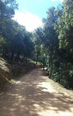 pasear montseny Escapada con niños al Montseny