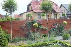 Przedwiośnie ogrodu..:) - strona 83 - Forum ogrodnicze - Ogrodowisko