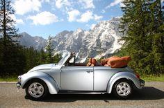 VW Käfer: Die im oberbayrischen Reichertshofen ansässige Firma Feine Cabrios...
