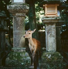 I love photos of cemeteries.