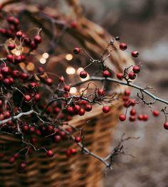 Magical Christmas, Christmas Mood, Cottage Christmas, Christmas Photos, Tis The Season, Winter Season, Winter Time, Autumn Cozy, Photos Voyages