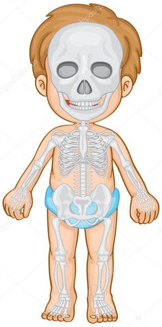 Skeletal system in human boy Royalty Free Vector Image Free Vector Images, Vector Free, Senses Preschool, Thank You Cards From Kids, Human Body Systems, Skeletal System, Kids Education, Pre School, Clip Art