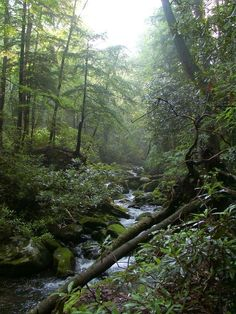 Temperate rain forest in the Great Smoky Mountains National Park, part of the Appalachian Mountains.