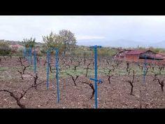 Erbaa Has Yaprak: Erbaa bağlarının son hali...08.04.2017