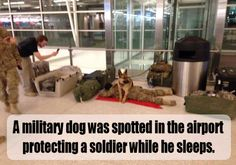 Dog A milltary dog was spotted in the airport protecting a soldier while he sleeps.