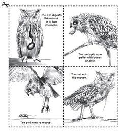 Owl Pellet Activity