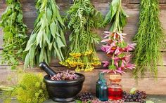 Growing medicinal herbs such as sage and ginger provide everyday health benefits and a source of herbal medicine in survival situations. Ayurvedic Medicine, Herbal Medicine, Chinese Medicine, Calendula, Natural Herbs, Natural Oils, Herbal Shop, Medicinal Plants, Immune System