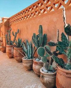 Cactus in Morocco - Balkon Fassade - Landscaping Along Fence, Succulent Landscaping, Planting Succulents, Backyard Landscaping, Fall Planting, Cactus Planta, Indoor Plants, Indoor Cactus, Container Gardening
