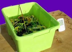 How to make a classroom compost box