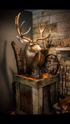Here's a great DIY project for your taxidermy! Deer Mount Decor, Deer Decor, Taxidermy Decor, Taxidermy Display, Deer Skulls, Deer Antlers, Deer Heads, Deer Hunting Decor, Hunting Gear